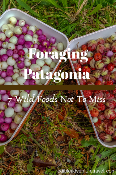 Foraging Patagonia - 7 Wild Foods Not To Miss