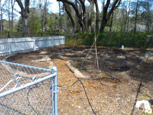 Burlap border is in place and filled with aged wood chips!