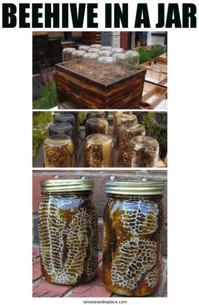 beehive-in-a-jar