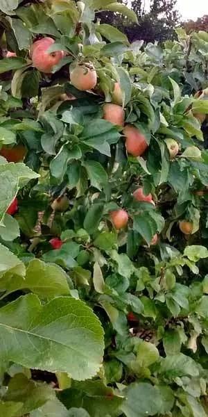 edibleculture