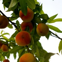 Meet your Farmer: Noquochoke Orchard