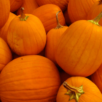 PRESERVING THE HARVEST: PETER, PETER PUMPKIN PRESERVER