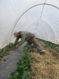 Growing food, new farmers and gardeners