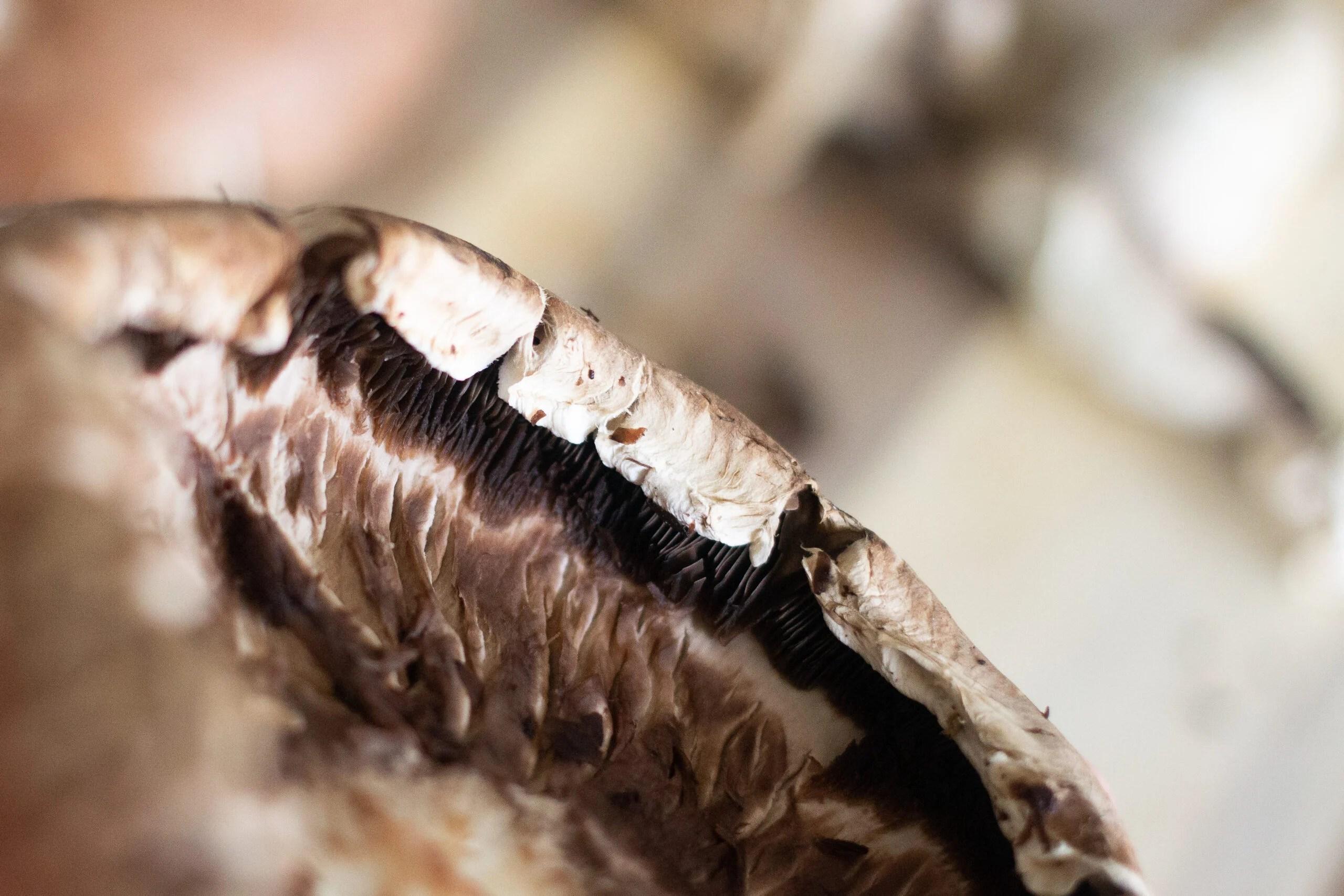 Close up of gills on portobello mushroom.