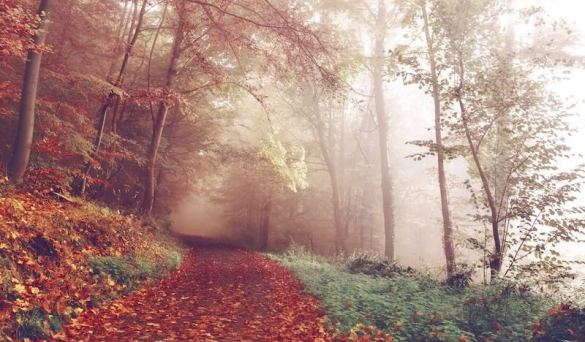 50 quotes for autumn - inspirational, motivational, and hygge quotes.