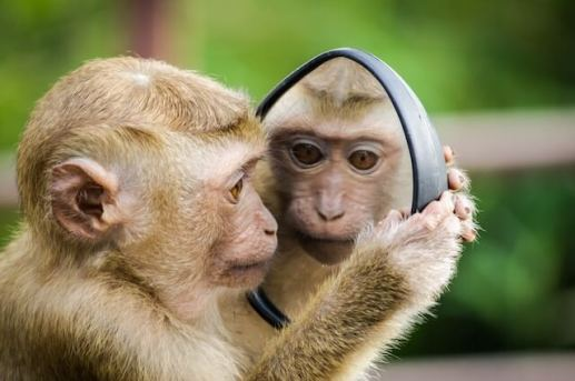 Are we all just wired to complain? How do mirror neurons affect our emotions? 1