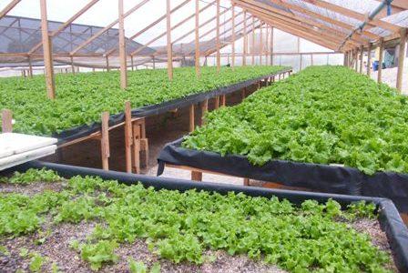 Financiarán proyectos de innovación en agricultura
