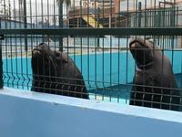 Municipio de Iquique se defiende ante acusación de organización animalista