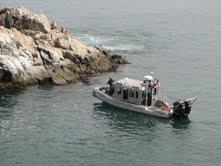 En Punta Patillos, sector costero de Iquique, decomisan 15 toneladas de guano blanco