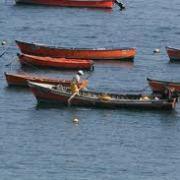 Más de 60 indicaciones a la Ley de Pesca presentó el Senador Rossi