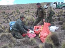 En cercanías de frontera con Bolivia Carabineros incautan marihuana y pasta base