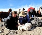 Conaf y Servicio País reanudan alianza para continuar trabajando en beneficio de Enquelga