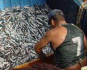 Subpesca abre concursos para 4 proyectos de evaluación de pesquerías