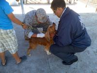 Seremi de Salud inició primera etapa de desparasitación de perros en Alto Hospicio