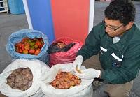 SAG decomisa 166 kilos de productos agrícolas en avanzada de Quillagua