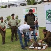 Programa arborización: CONAF  donó 170 especies a Carabineros