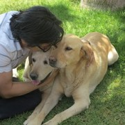 Sin fuerzas, estresados, con sed y hambre, perros labradores buscaban a sus dueños: Y los encontraron