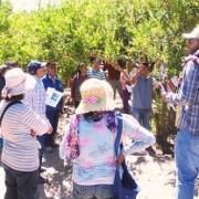 Indap capacita a agricultores y realiza prácticas en Parcela Demostrativa