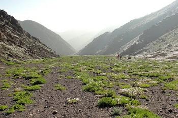 Insólita floración en la quebrada de La Chimba, Antofagasta: «Desierto florido» en trópico de Capricornio