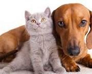 En Sede Social Teniente Ibañez, realizarán operativo de esterilización de mascotas