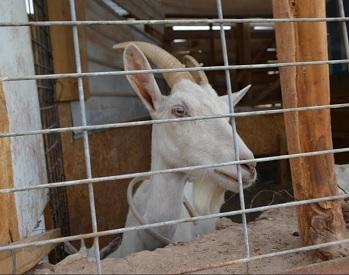 Agricultores de Pozo Almonte aprenden sobre costos de producción para mejorar emprendimientos
