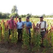 Mediante charlas en Iquique y Pozo Almonte, difunden convocatoria para fortalecer la innovación en cooperativas del agro