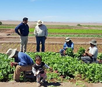 Programa de Fomento a la Calidad de CORFO inicia certificación a la producción agrícola en pleno desierto, en Pintados