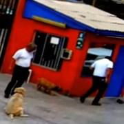 Sumario Interno en la UNAP por robo de celular a estudiante, que contenía grabación del ingreso de FFEE de carabineros al recinto universitario
