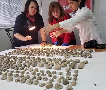 Operación de rescate patrimonial permitió el decomiso de fósiles con más de 250 millones de años de antigüedad
