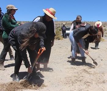 Exponen conocimientos ancestrales sobre la siembra tradicional de la quinua, para legar a jóvenes aymaras las tradiciones agrícolas