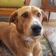 Las mascotas no se contagian con el COVID 19, pero se podrían contaminar su pelaje o patas