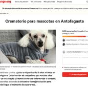 En Antofagasta reúnen firmas para lograr que se construya un crematorio de mascotas