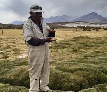 Implementan planes de manejoGanadero en humedales altoandinos en comunas de Colchane y Pica