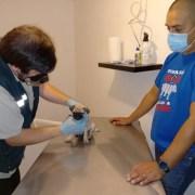 Inician trabajo conjunto para frenarcontrabando de canes de raza. Hay registro de ingreso de más de una treintena de estas mascotas