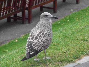 Edinburgh Fringe Day10_0097