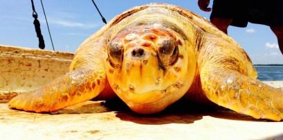 Biodiversity of Edisto Beach and coastal South Carolina