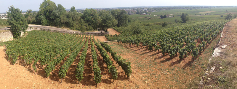 Vineyard, Côte de Beaune, France -- I specialise in editing viticulture and oenology papers!