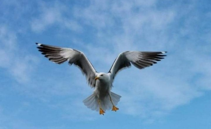 Edith Ohaja Grow your wings before you fly