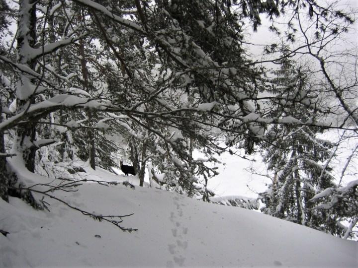 2009-02-Orbey éclairci (21)