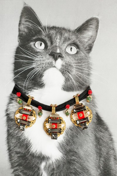 Liam Thinks In Catvertisements Cats Wearing Jewelry