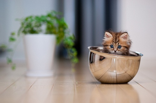 Is This The Cutest Kitten Ever? - DesignTAXI.com