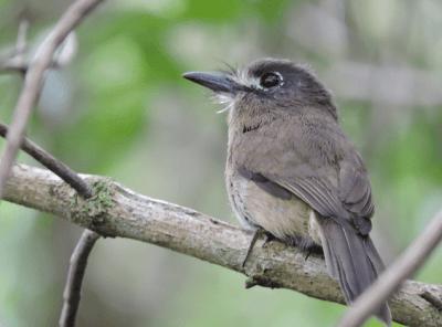 "Birdwatching: Setembro ""rende"" 19 novos registros ornitológicos para Peruíbe, no Wikiaves"