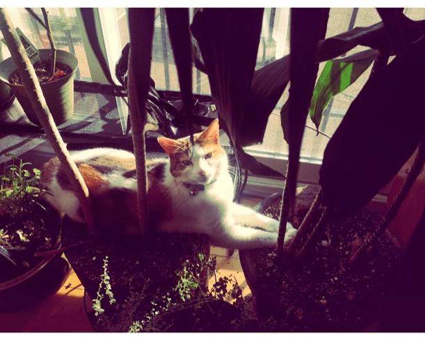 cat allergies - reactine - gracie carroll