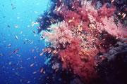 coralsoft2