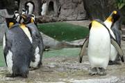 penguine3