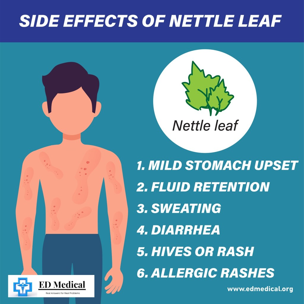 Side effects of nettle leaf