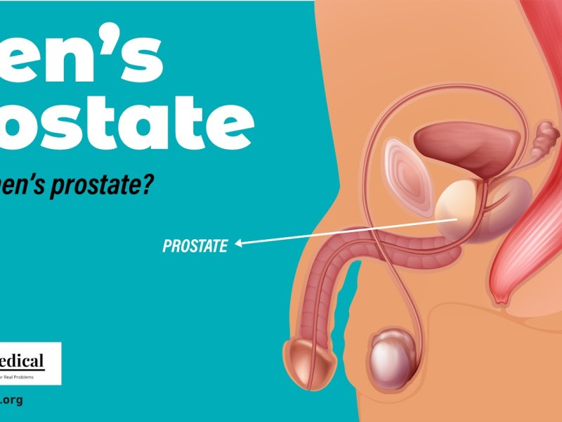 What is men's prostate?