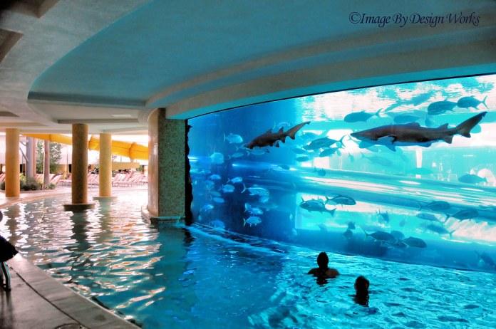 Shark Tank at the Golden Nugget