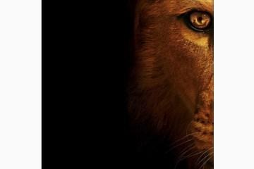 wildcat lion