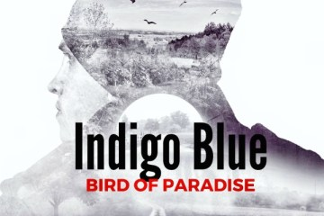 indigo blue bird of paradise